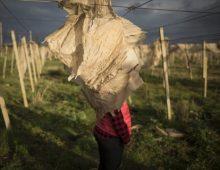 Sfruttamento, stupri e aborti: le braccianti rumene in Sicilia vivono ancora come schiave